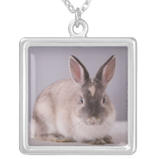 rabbit,simple background,animal,white table, square pendant necklace
