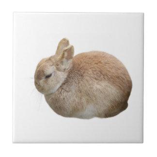 Rabbit Small Square Tile