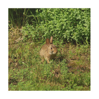 Rabbit, Wood Photo Print. Wood Print