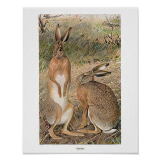 Rabbits in the Field Print