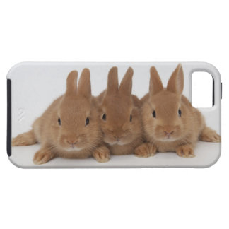 Rabbits.Netherland Dwarfs. iPhone 5 Cover