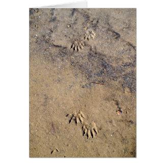 Raccon Tracks on Caladesi Island Beach Card