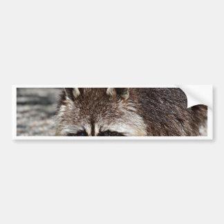 raccoon 415P Car Bumper Sticker