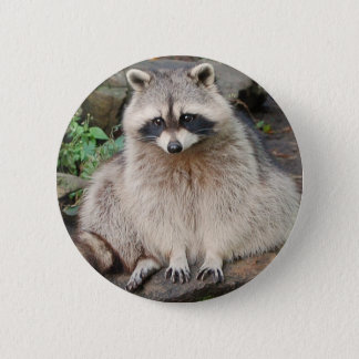 Raccoon 6 Cm Round Badge