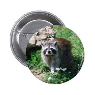 Raccoon 6 Cm Round Badge