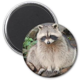 Raccoon 6 Cm Round Magnet