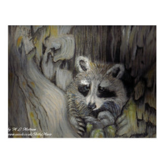 Raccoon at Home Postcard