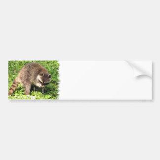 Raccoon Bathing Bumper Sticker Car Bumper Sticker