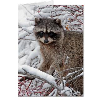 Raccoon Card
