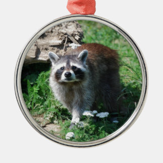 Raccoon Christmas Ornament
