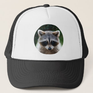Raccoon Coon Wild Animals Wildlife Hat