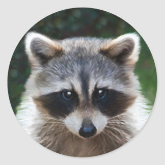Raccoon Coon Wild Animals Wildlife Stickers