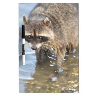 Raccoon Dry Erase Board