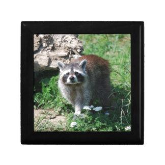 Raccoon Gift Box
