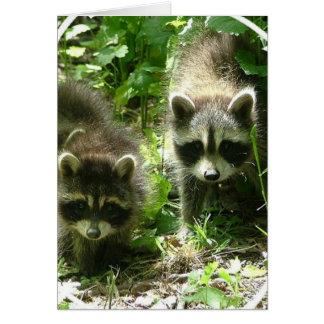 Raccoon Habitat Greeting Card