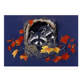 Raccoon Hideaway Postcard