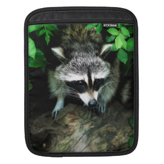 Raccoon In Forest Woods Nature, iPad Mini Sleeve