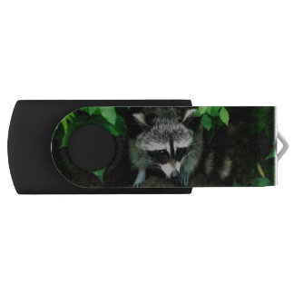 Raccoon In Forest Woods Nature, USB Flash Drive