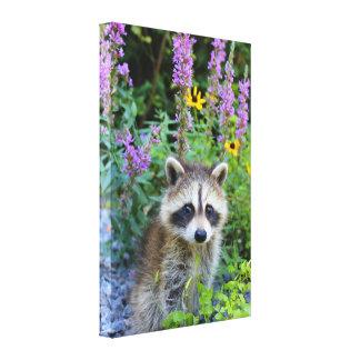 Raccoon kit among the flowers canvas print.