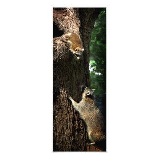Raccoon Mother and Kit 2 Photo Art
