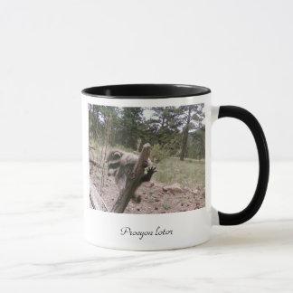 Raccoon mug - Procyon lotor