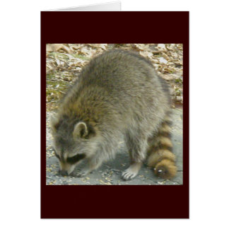 Raccoon on Rock Note Card