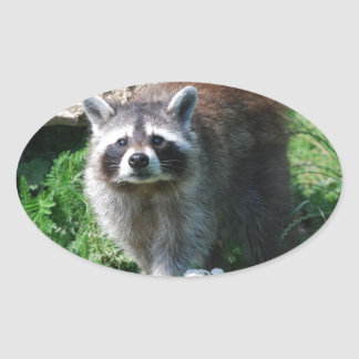 Raccoon Oval Sticker