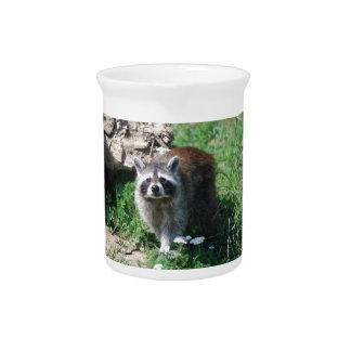 Raccoon Pitcher