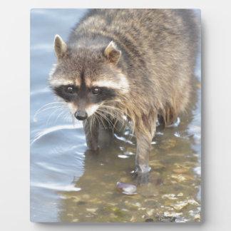 Raccoon Plaque