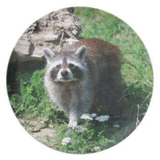 Raccoon Plate