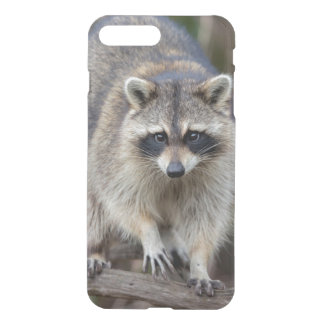 Raccoon, Procyon lotor, Florida, USA 2 iPhone 8 Plus/7 Plus Case