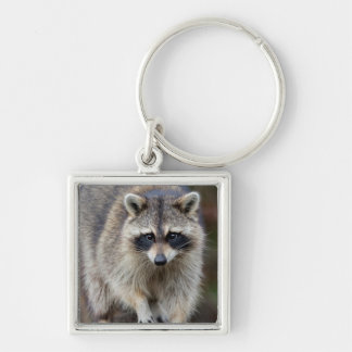 Raccoon, Procyon lotor, Florida, USA 2 Key Ring