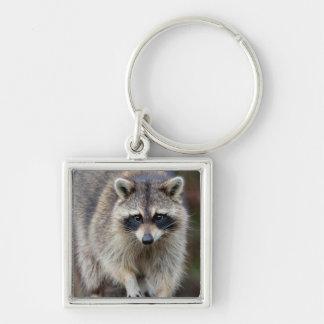 Raccoon, Procyon lotor, Florida, USA 2 Key Ring