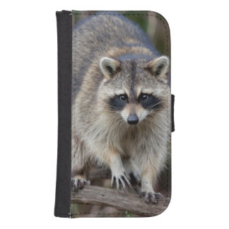 Raccoon, Procyon lotor, Florida, USA 2 Samsung S4 Wallet Case
