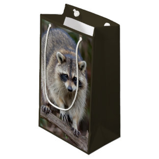 Raccoon, Procyon lotor, Florida, USA 2 Small Gift Bag