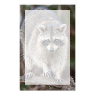 Raccoon, Procyon lotor, Florida, USA 2 Stationery
