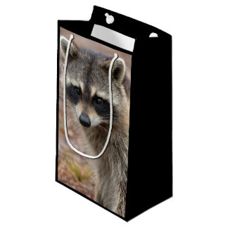 Raccoon, Procyon lotor, Florida, USA 3 Small Gift Bag