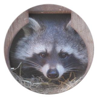 Raccoon Racoon Plate