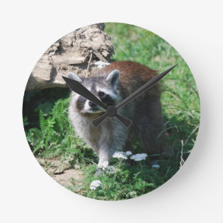 Raccoon Round Clock