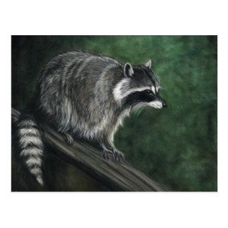 """Raccoon"" Wildlife art Postcards"