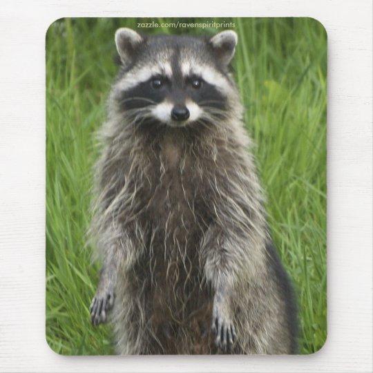 RACCOON WILDLIFE Mousepads