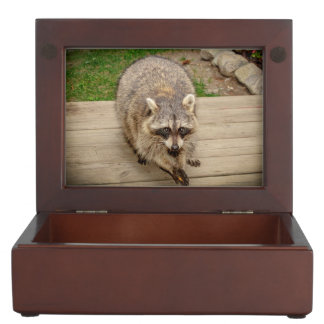 Raccoon with a chip keepsake box