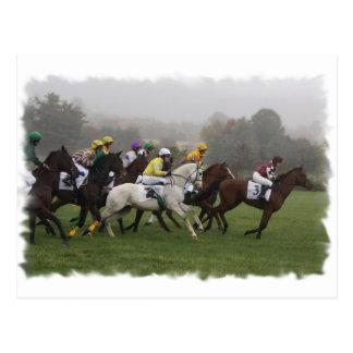 Race Horse Field Postcard
