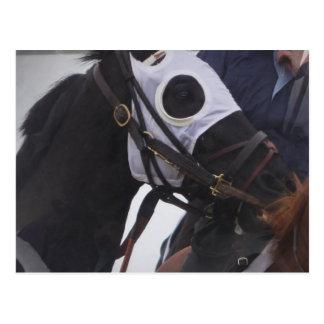 Race Horse Postcard