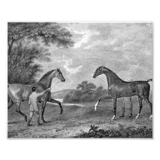 Race Horses Black and White Photo Art