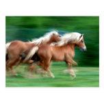 Racing Palomino Horses Postcard
