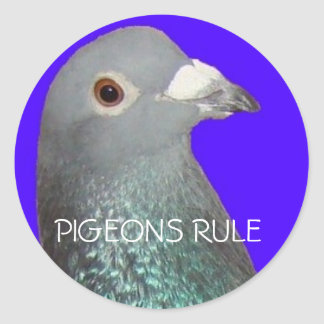 Racing pigeon head blu background, PIGEONS RULE Classic Round Sticker