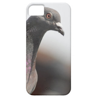 Racing pigeon iPhone 5 cases