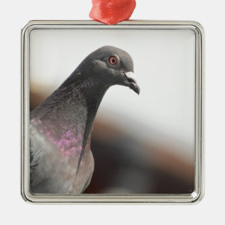 Racing pigeon Silver-Colored square decoration