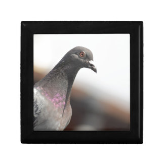 Racing pigeon small square gift box